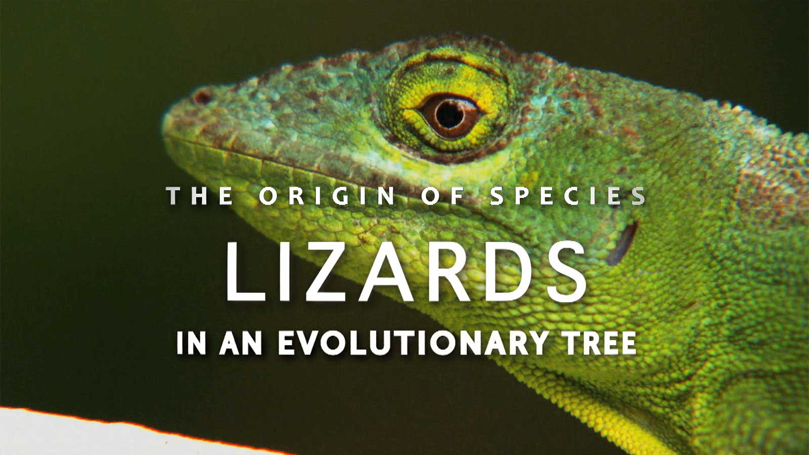 lizards title screen