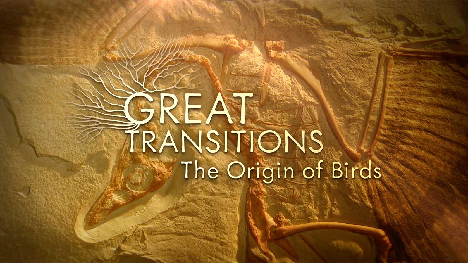 origin of birds title screen