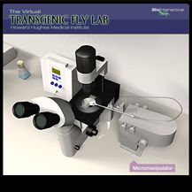 Transgenic Fly Virtual Lab
