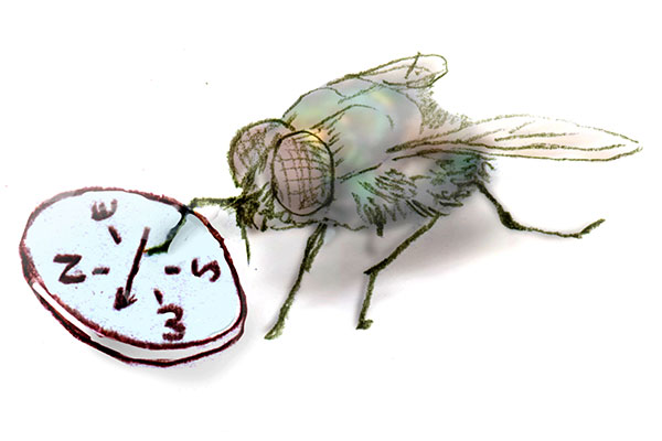 Bulletin: A Compass for Flies