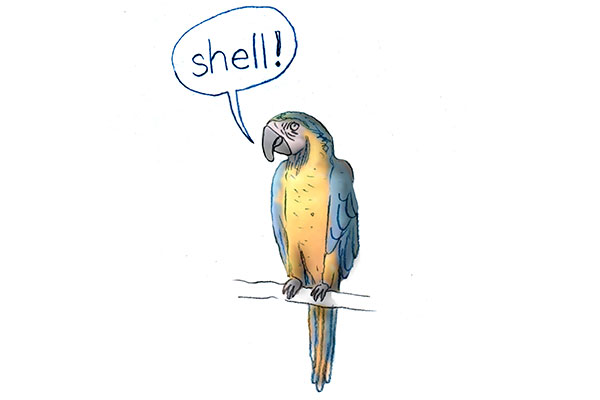 Bulletin: Lessons from Parrots