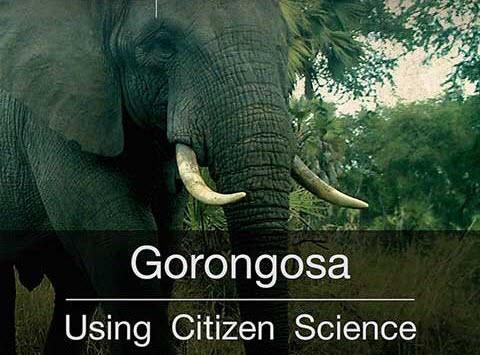 Gorongosa elephant