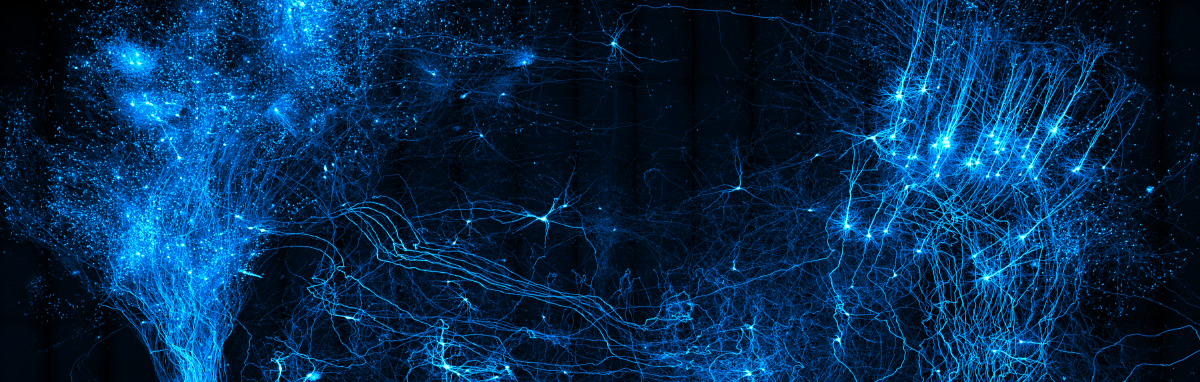 Image shows maximum intensity projections of neurons through a portion of the mouse brain.