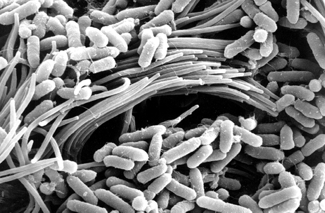 research papers on pseudomonas