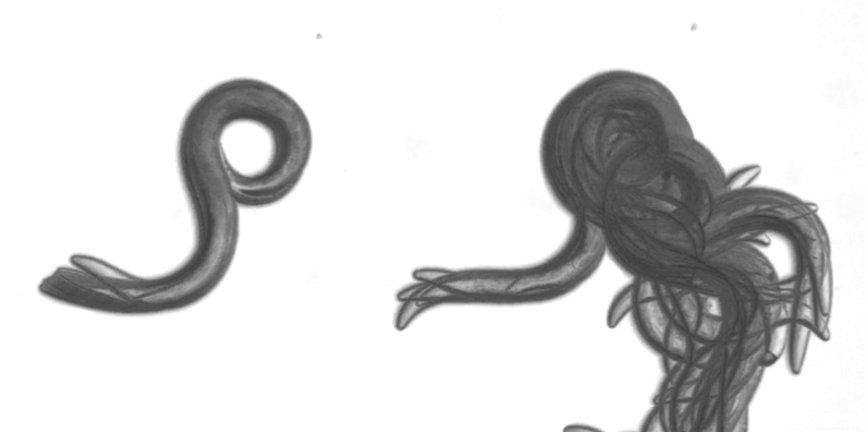 Deet Scrambles Worms U2019 Sense Of Smell