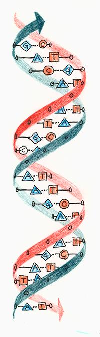 Geis DNA