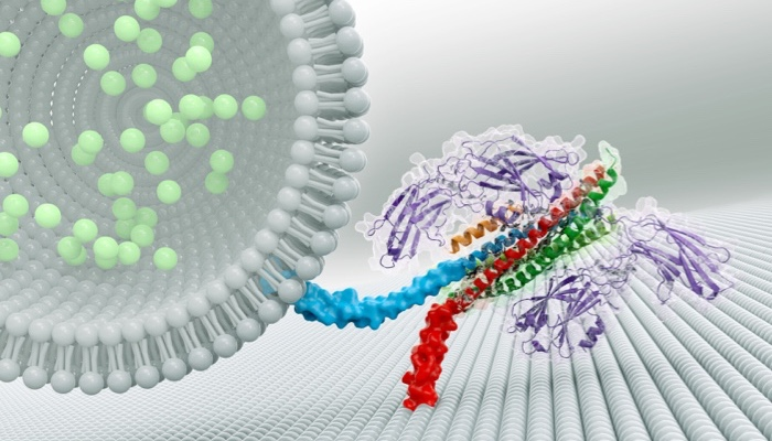 Proteins that work together to permit rapid Communication by Brain Cells: By evolution, or design? COVERS-Brunger_crop_700x400