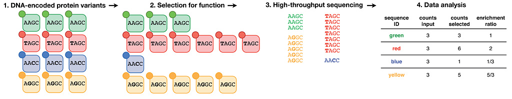 Figure 1: Deep mutational scanning generates protein sequence-function relationships...