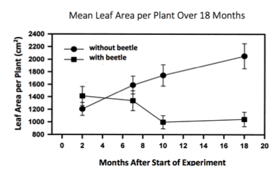 Mean Leaf Area Per Plant Graph
