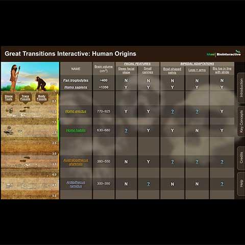 Screenshot of the interactive's main screen