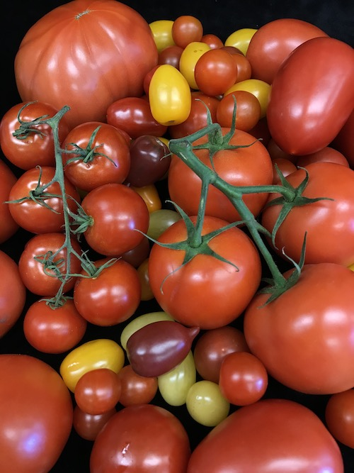 Joint and jointless tomato mutations