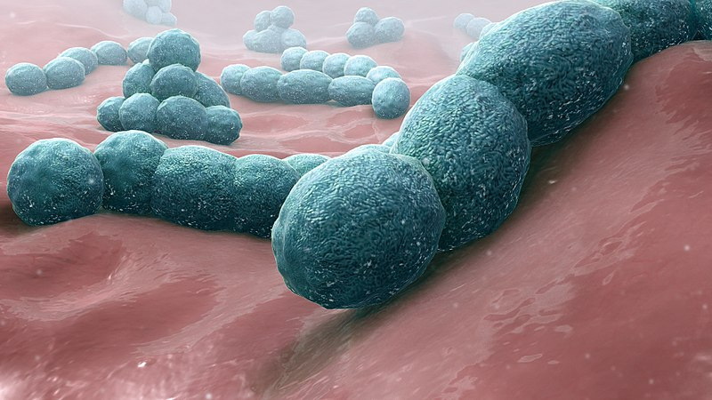 Microscopic image of Streptococcus pneumoniae