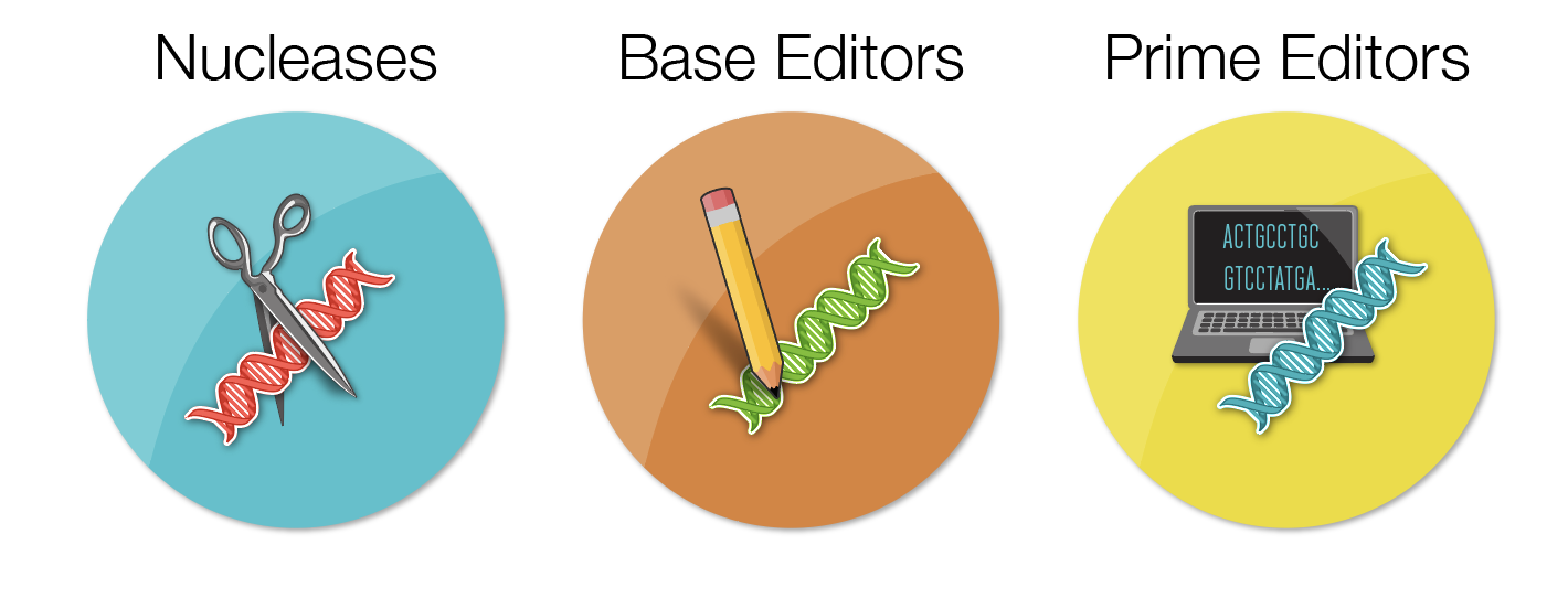 Nucleases Base Editors Prime Editors