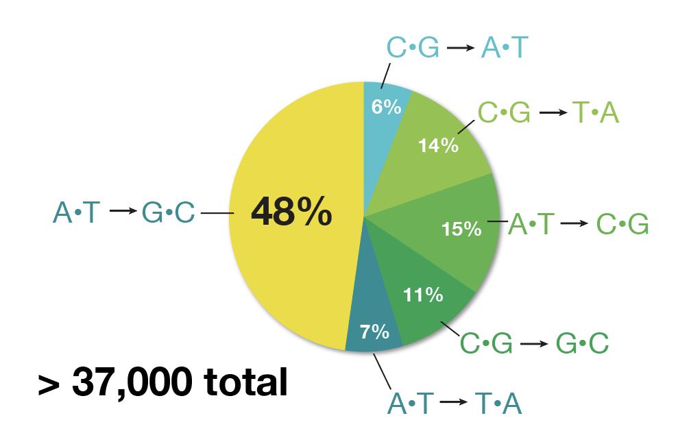 Pie chart of mutations