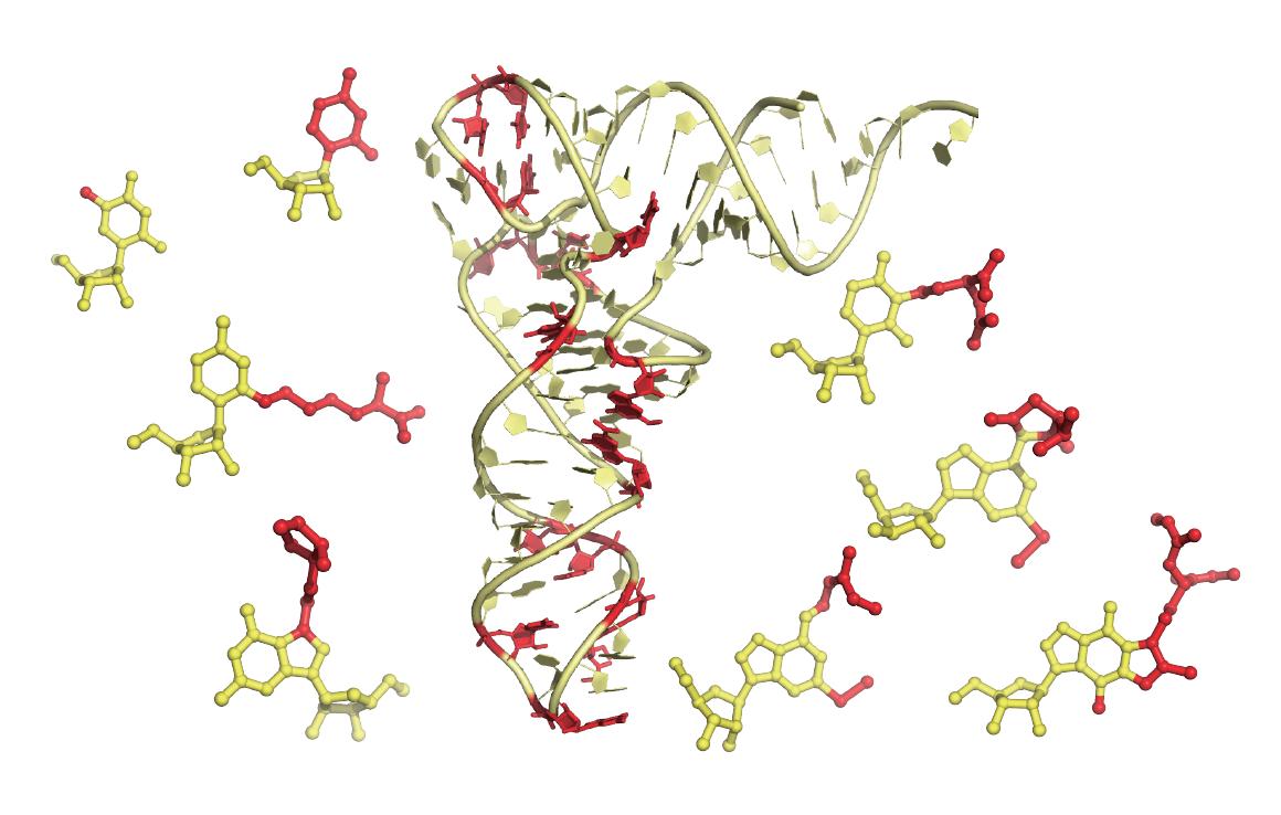 Transfer RNA molecules