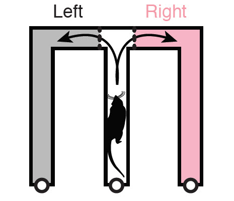 Rat maze graphic: making right vs. left decisions