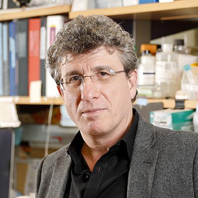 Michele Pagano, MD | HHMI org