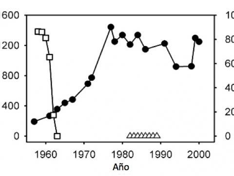 Población de ñus en el Serengueti