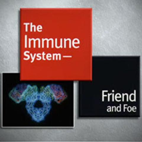 The Immune System: Friend and Foe
