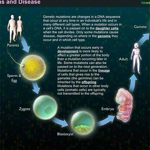 Genetic Mutations and Disease Interactive