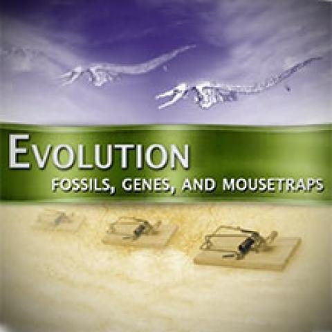 Evolution: Fossils, Genes, and Mousetraps