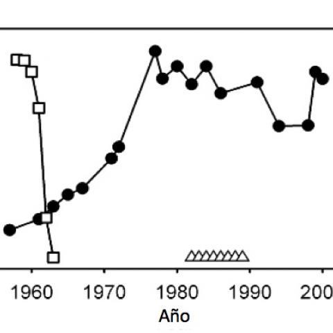 Regulación de la población de ñus en el Serengueti