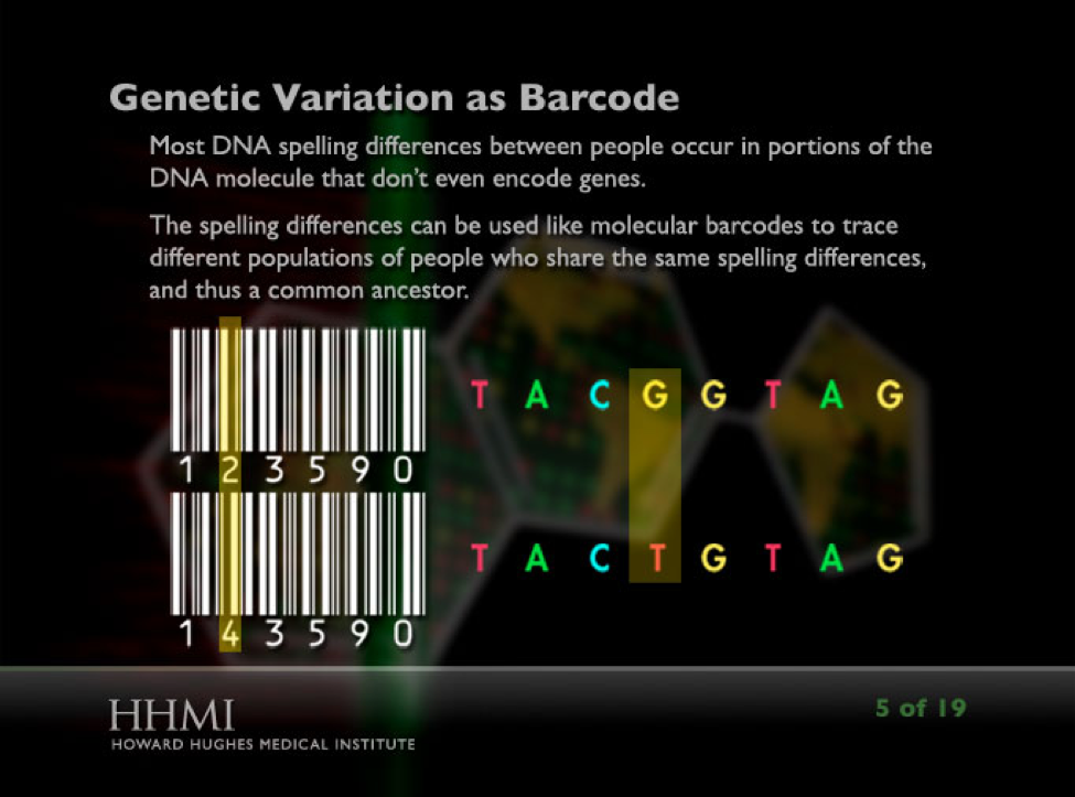 """This image shows a slide from the """"Using DNA to Trace Human Migration"""" Click & Learn."""